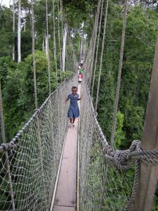 Aerial walkway through the rainforest at Kakum National Park in Ghana. Photo by Barbara Borst